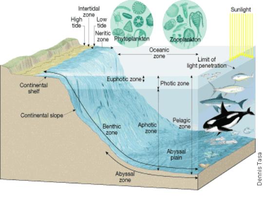 Cosscience1 lesson 6 05 the diversity of ocean life for Ocean floor zones diagram